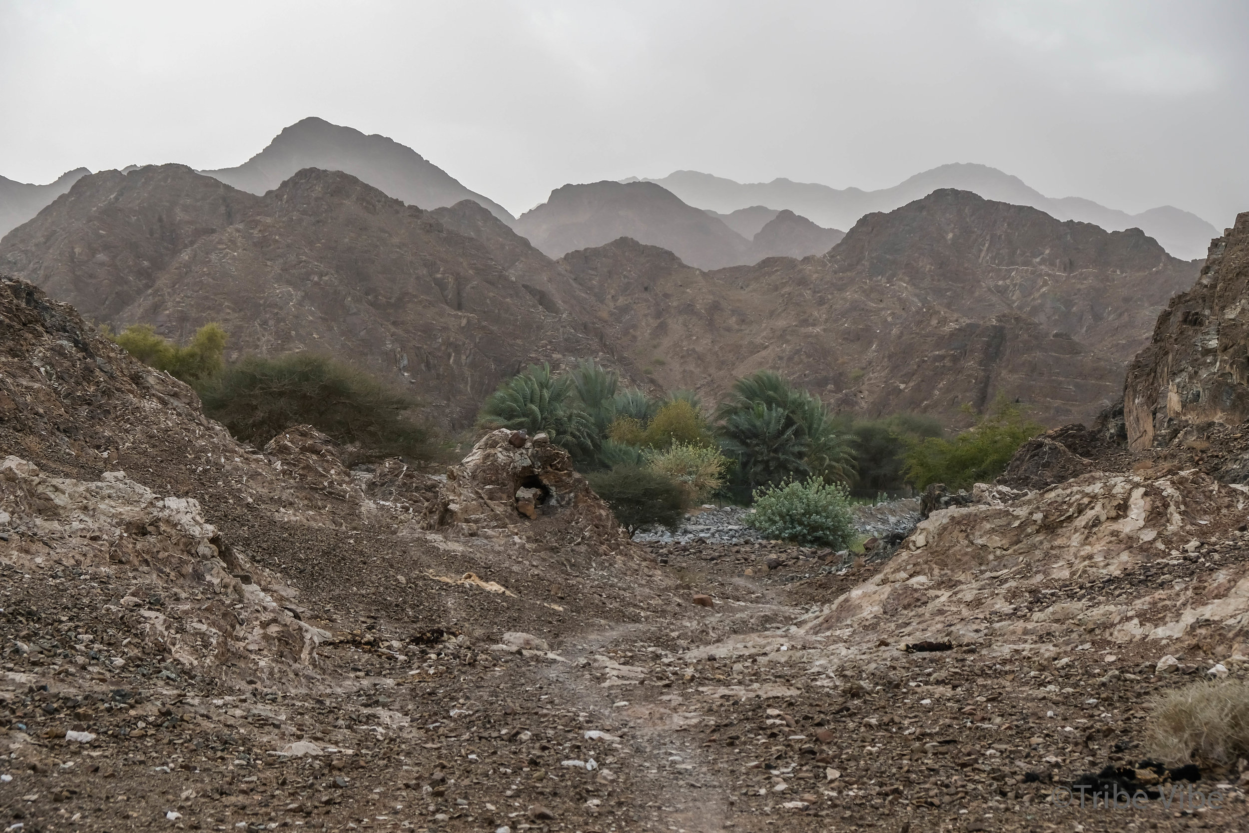 walking in the wadi of the camel farm hike in UAE27.jpg