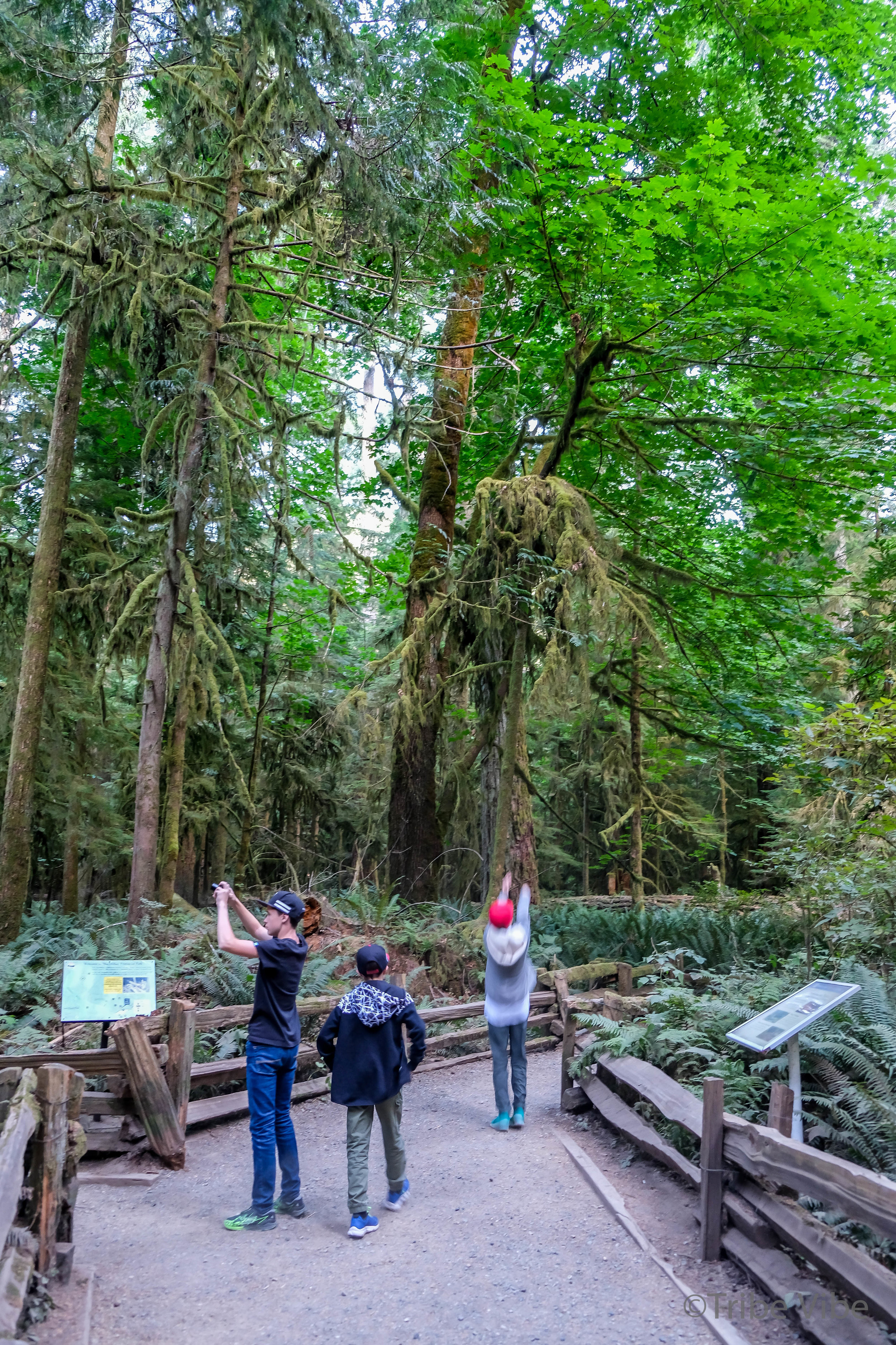 cathedral grove6.jpg