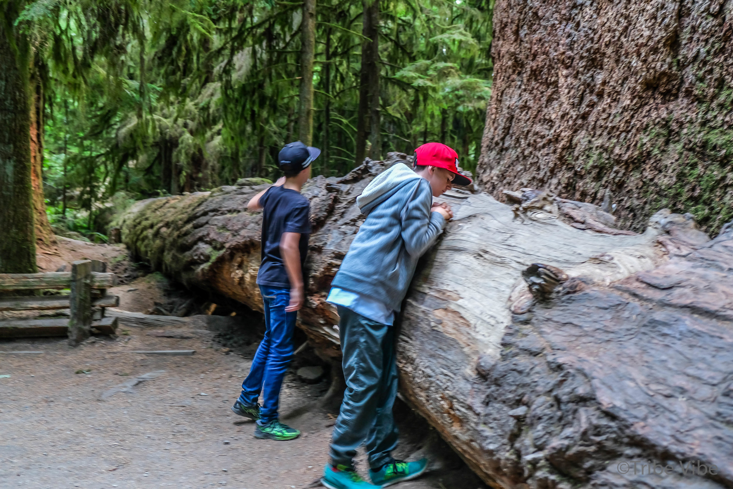 cathedral grove21.jpg