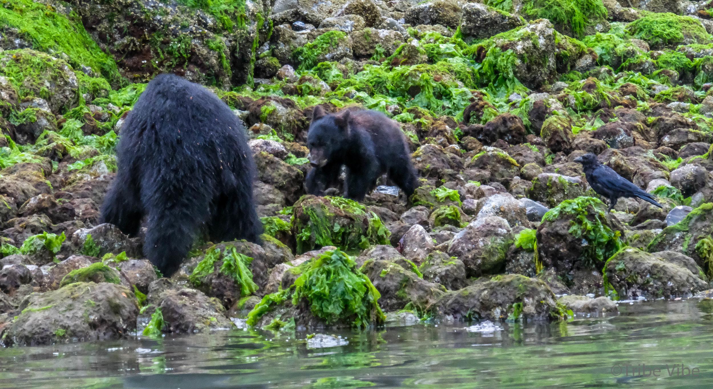Mama bear and baby bear!