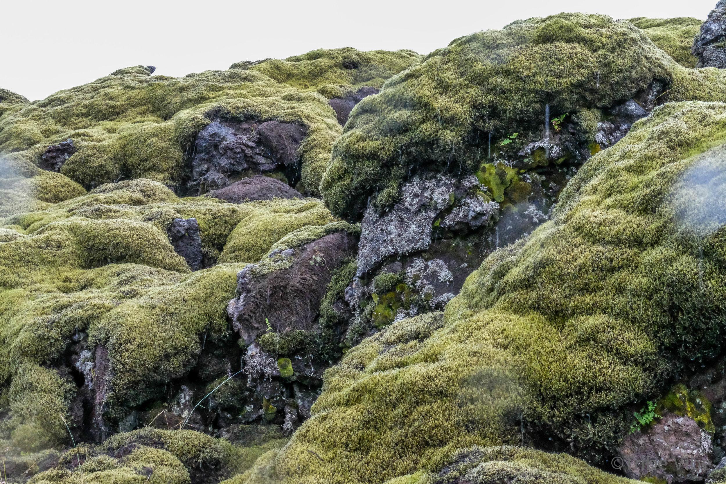 Eldhraun lava field 16.jpg