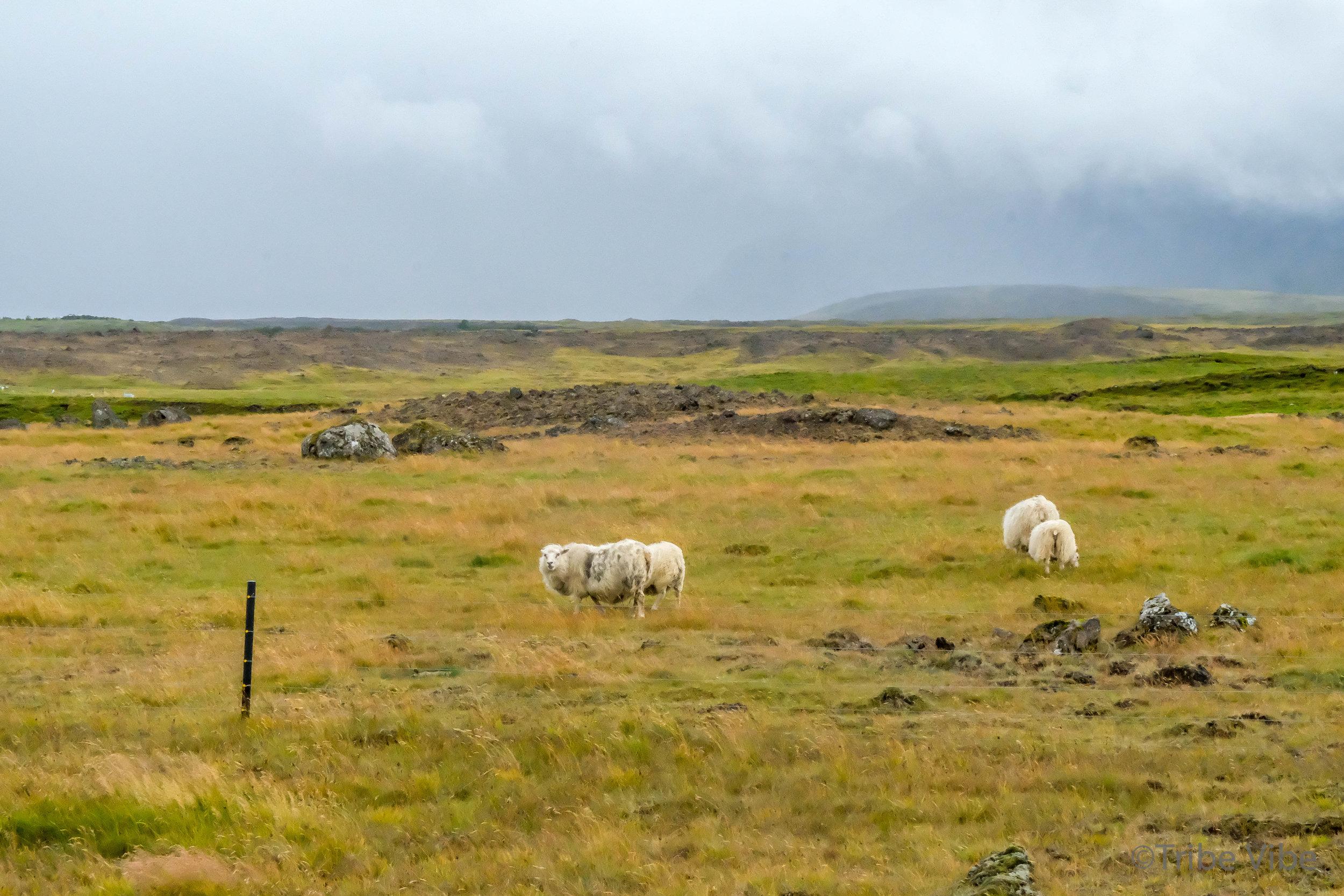 Iceland landscapes-9.jpg