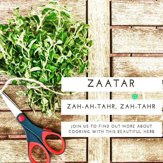 "We are very excited to offer a super fun cooking experience as we explore a popular flavour of the Middle East, ""Zaatar."" In a very relaxed atmosphere of fellow expats, you will have the opportunity to use Zaatar to make Manooshe, Fatayer, and to elevate chicken in a way you won't believe.  If you are in Dubai on Nov. 1st please join us. For more info please email us at tribevibegroup@gmail.com. #tribevibeblog #zaatar #manooshe #fatayer #flavoursofthemiddleeast"