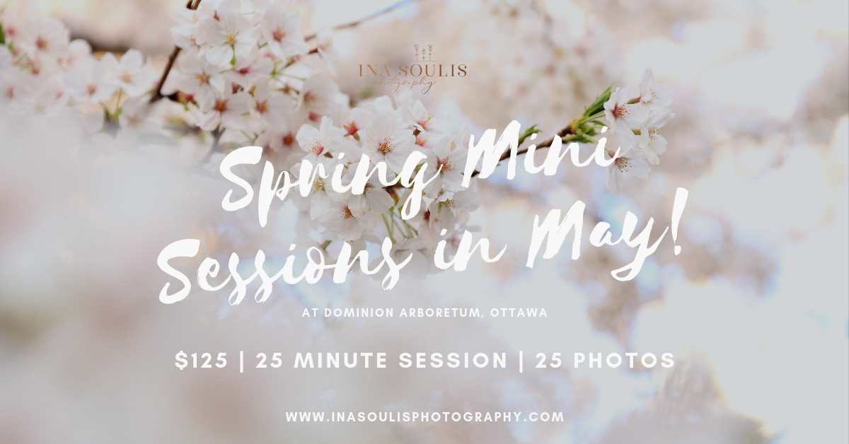 White cherry blossoms Ottawa Dominion Arboretum Spring Mini Sessions May promotion information