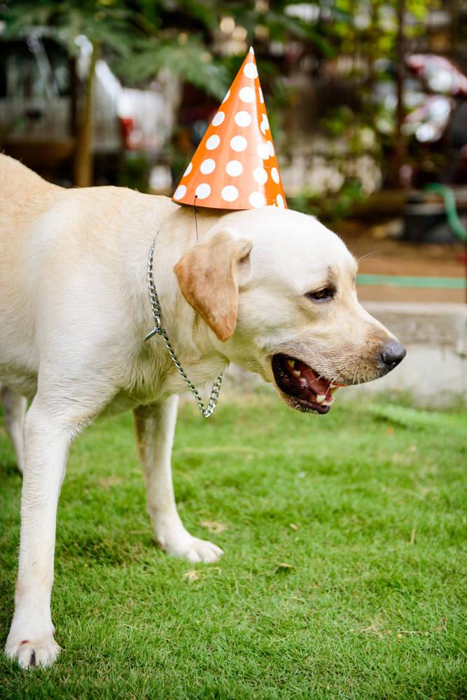 oscar-birthday-17.JPG