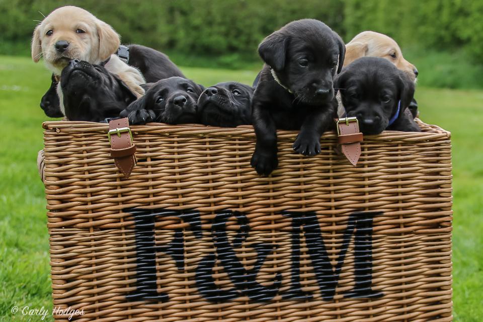 Lupridge Puppies Low Res Web-67.jpg
