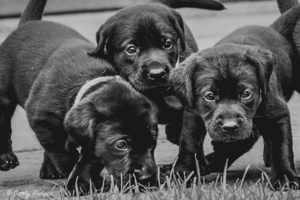 Lupridge Puppies Low Res Web-22.jpg