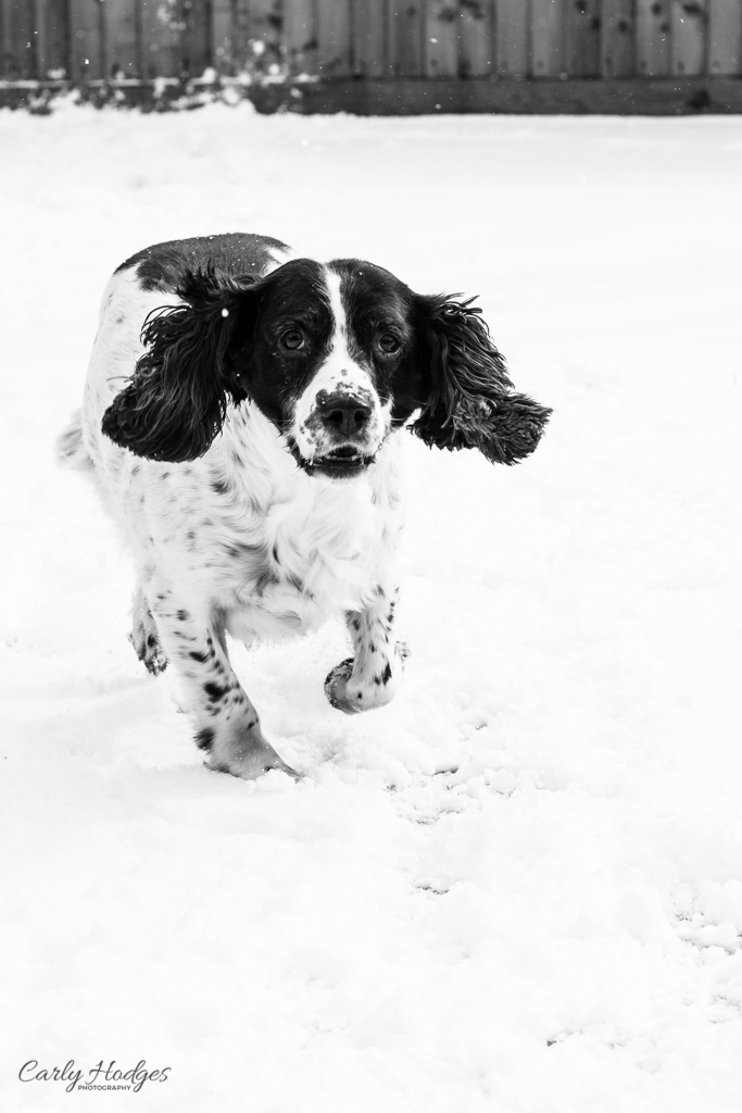 Snow Day-47.jpg