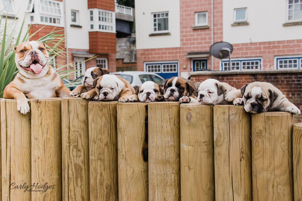 British Bulldogs-133.jpg