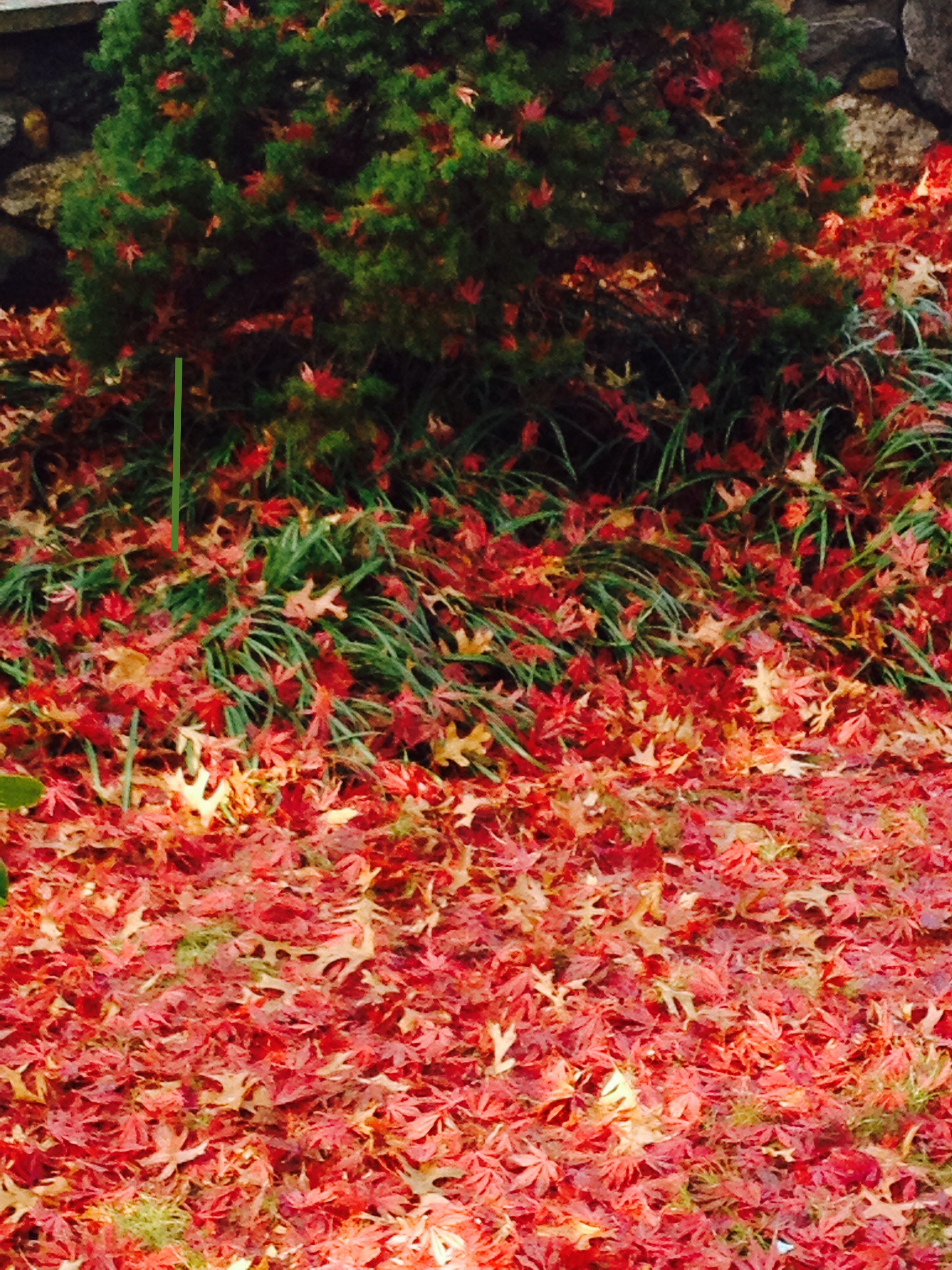 These are days of crimsons, golds, ochres, blues, greens, rusts. It is the opening of Fall when leaves are slowly turning and appearing along the banks and in the woodlands of the Hudson Valley. It is the warmth of the sun on your body, while picking apples and gourds on a lusciously warm Autumnal day.  This year on October 28th and November 11th, we are inviting you to join a one or two day experience integrating photography and meditation. Perhaps you would like to see what you think you see, or perhaps you would like to see anew; with fresh eyes, peering through your camera's lense with new interest and views. We will be learning, hiking, photographing, meditating and discussing our experiences.............oh and let's not forget the eating.........lunch is provided for an additional small fee or bring your own...................Each day's cost is $75.00 US, add another day for additional enrichment and communal practice. You are welcome to add any amount over 75.00; to offset the cost of scholarship for other auspicious participants as well.  Register with Karen Noreika at 914-941-4455 Ext. 106  The opportunity out there, lies within...............See you there!...................Joy