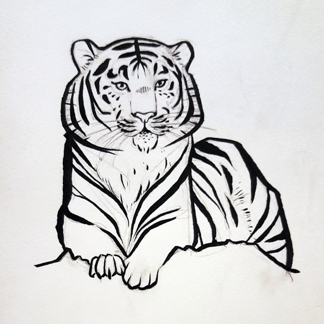 Copy of Tiger sketch