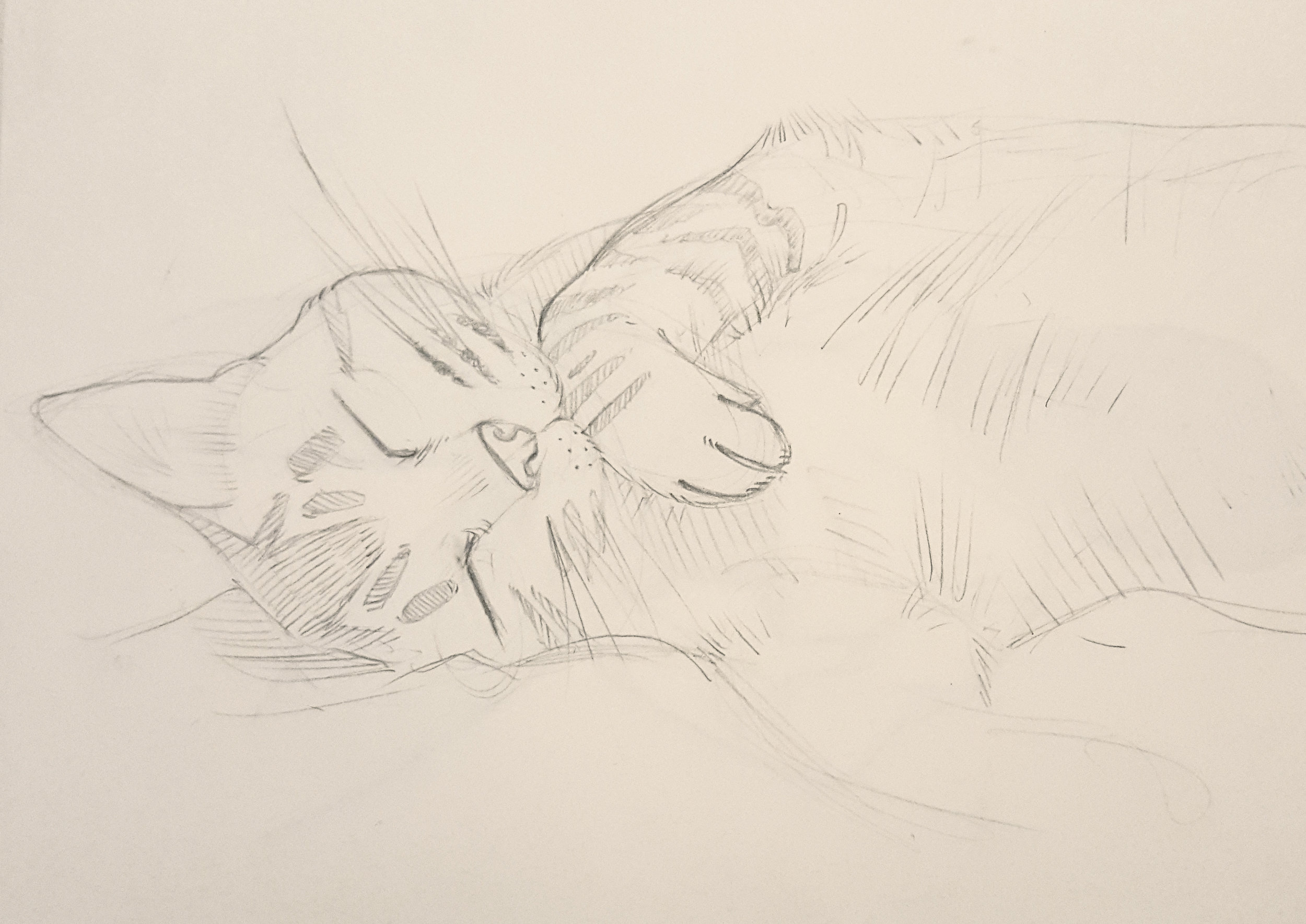 Copy of Sleeping Cat sketch