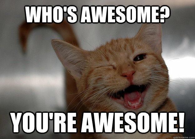 awesome cat.jpg