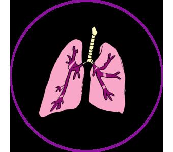 pulmon3.png