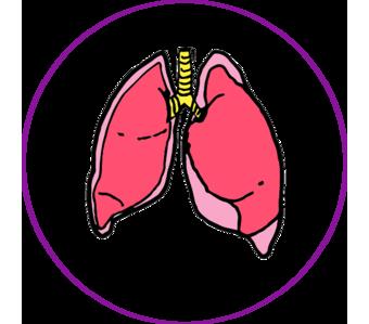 pulmon1.png