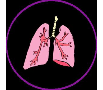 pulmon2 copia.png