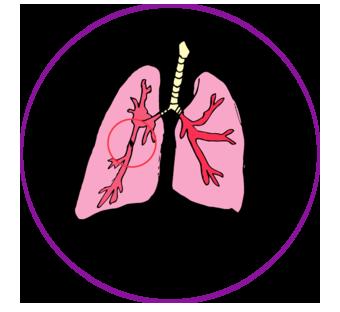 pulmon6.png