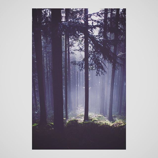Black Forest | Germany | Photo 4 #blackforest #forest #light #magicmoment