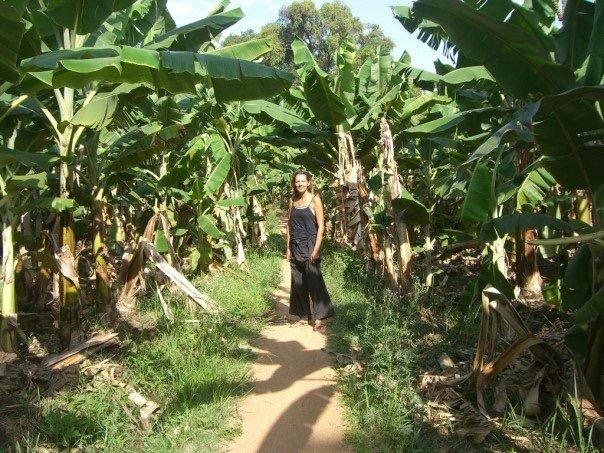 Hampi banana plantations- Hampi India .JPG