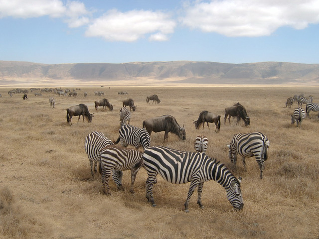 Willife at the Ngorongoro. crater Serengeti National Park.JPG
