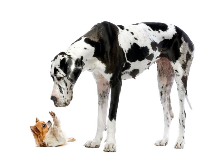 Trademark-Infringement-Dog-Fight.jpg