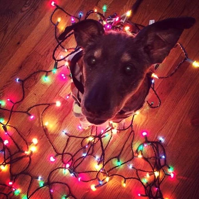 Ellie Lights.jpg