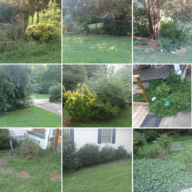 This was a massive cleanup a few months ago. Property had been neglected for years. www.propertypronc.com