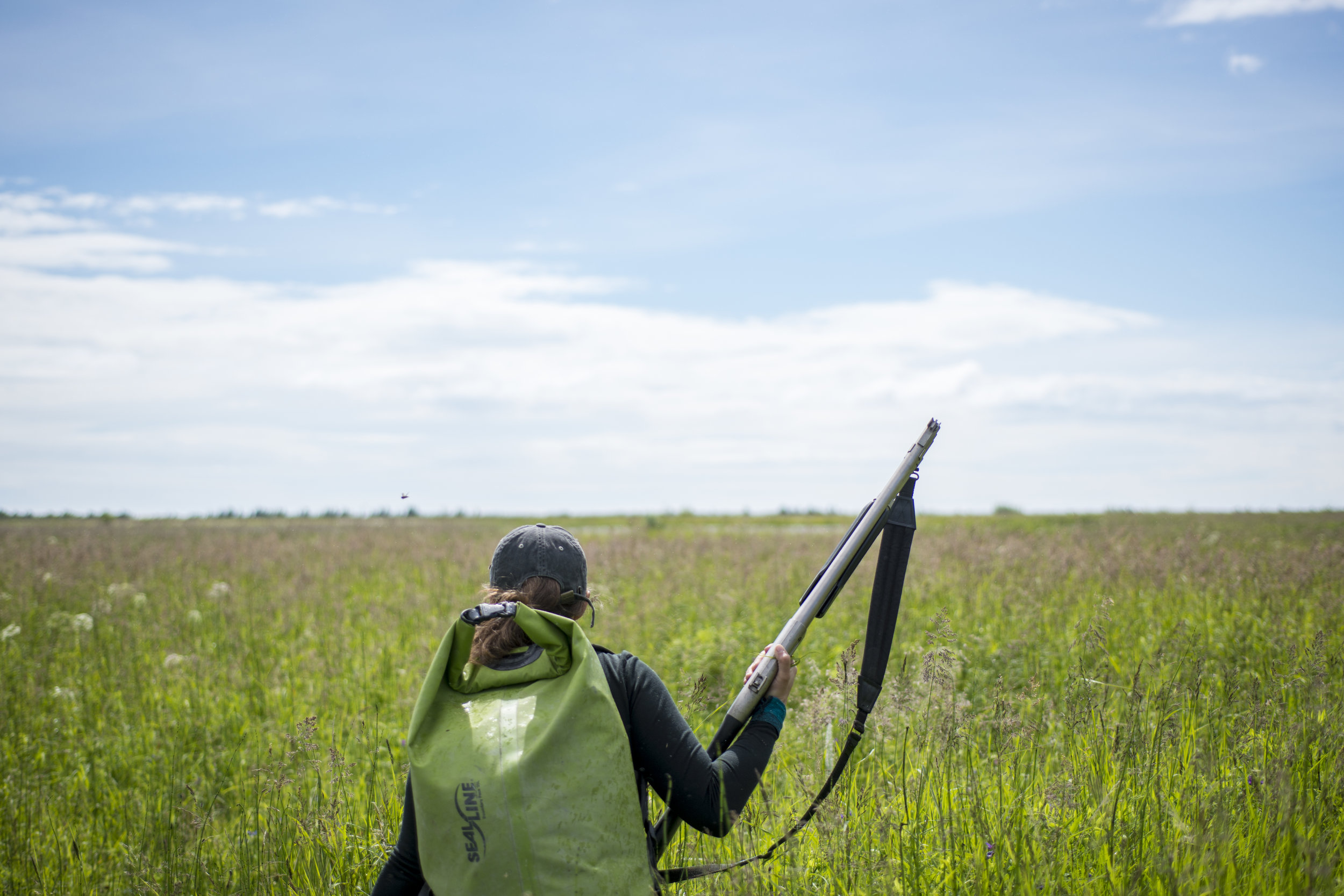 Elizabeth Camarata, member of the Alaska Forest Service, totes a large rifle to protect her and the group from bear attacks while working in the Copper River delta on a Elodea treatment.