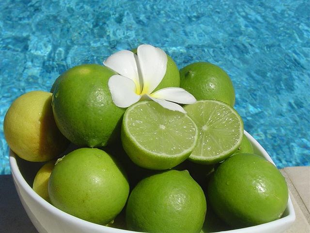 These juicy limes were organically grown on the #myolafiji grounds! The perfect accompaniment to a twilight gin and tonic 🍹 #fiji #luxury #travel