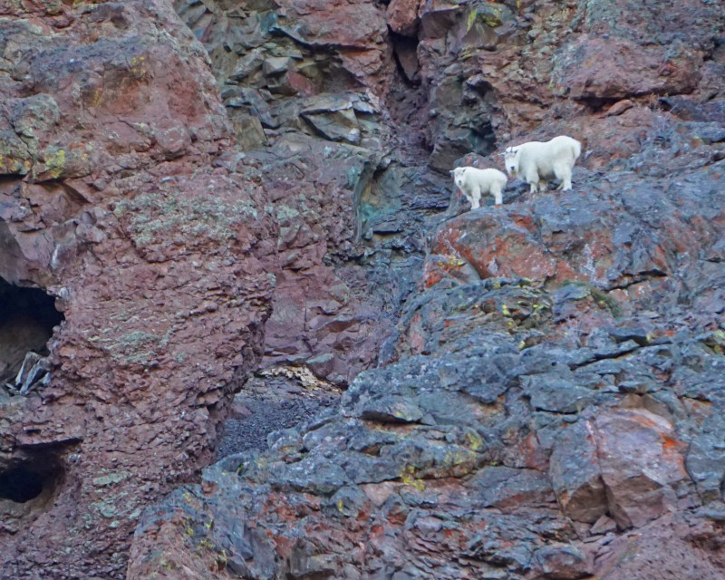 Except when you see mountain goats on the hike out.