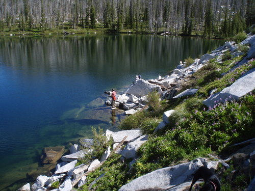 There was snow at the lake where was camped, in shady places. The elevation was about 8000'. I don't think I have seen more shooting stars than there were around the lakes and wet places at these lakes.