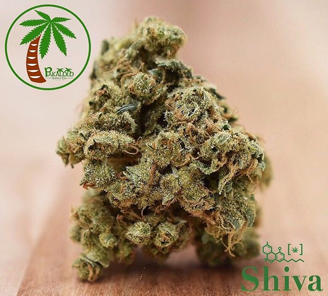 What's better to give mom on Mother's Day than a big bag of flower! Out today is Shiva from @pakalolosupplycoak just in time for mom.  Shiva | Hybrid | 24.49 THC | 0.00 CBD