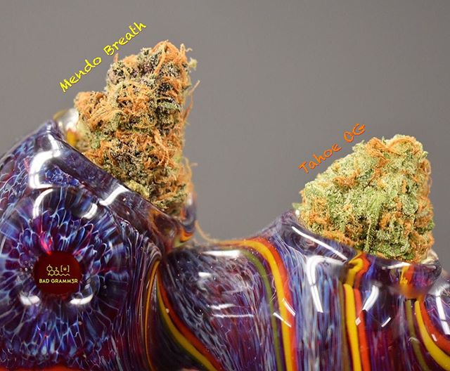 Back by popular demand Tahoe OG by @frontiergrowlabs will be returning this weekend! Next week we have something new for you from @willsworld_ak , Mendo Breath.