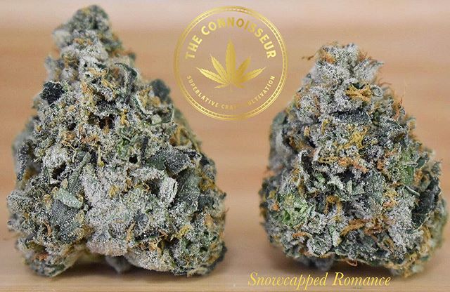 The snow might be gone but this Snowcapped Romance by the @the_connoisseur_ak has never been frostier! Snowcapped Romance |  Hybrid | 29.76 THC | 0.11 CBD  #License 11121