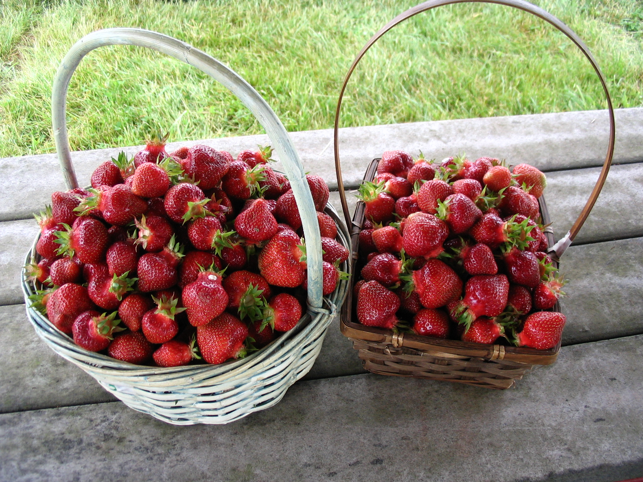 Pick-your-own Fresh Strawberries