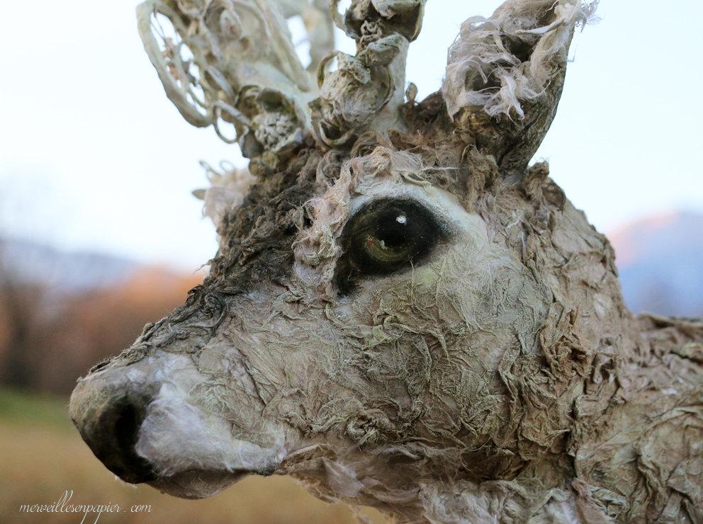 deer trophy 5.jpg