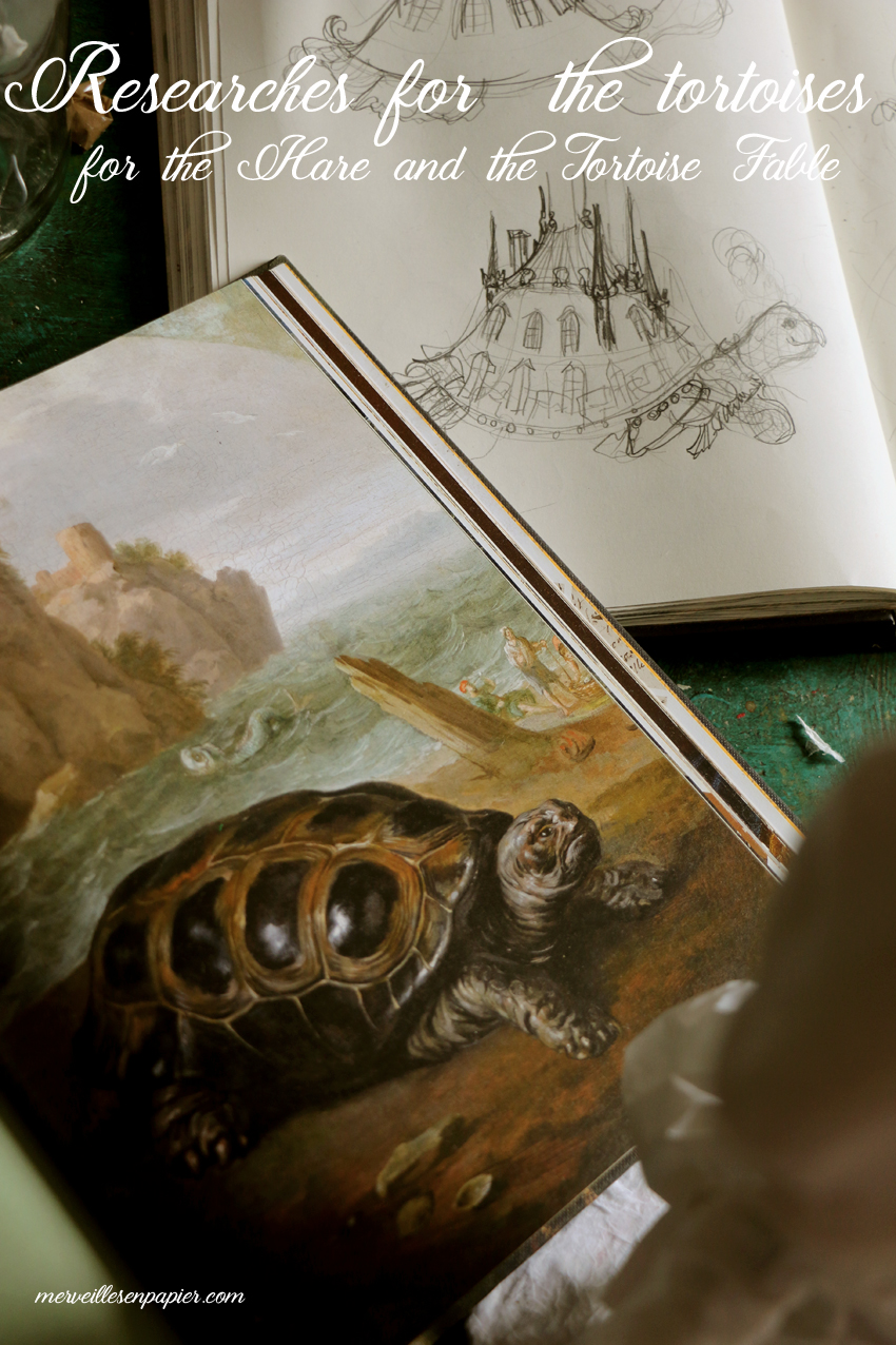Reasearches for the different tortoises inspired by La Fontaine's fable