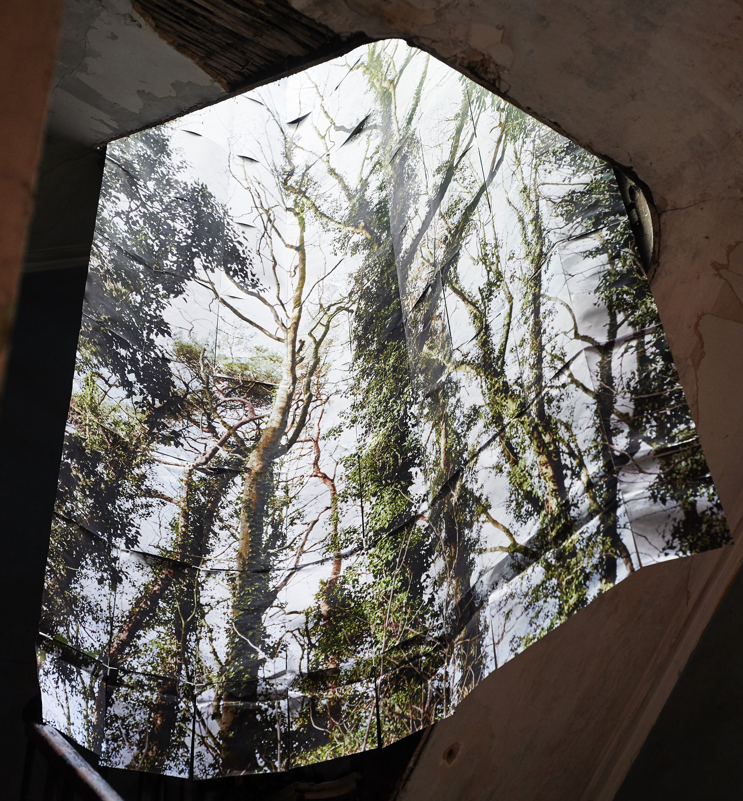 Rising Trees