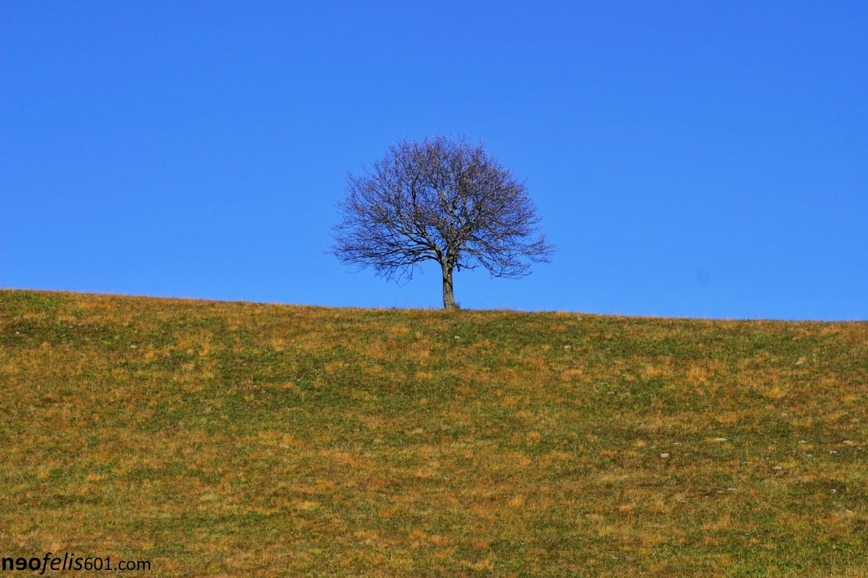 Loneley Tree