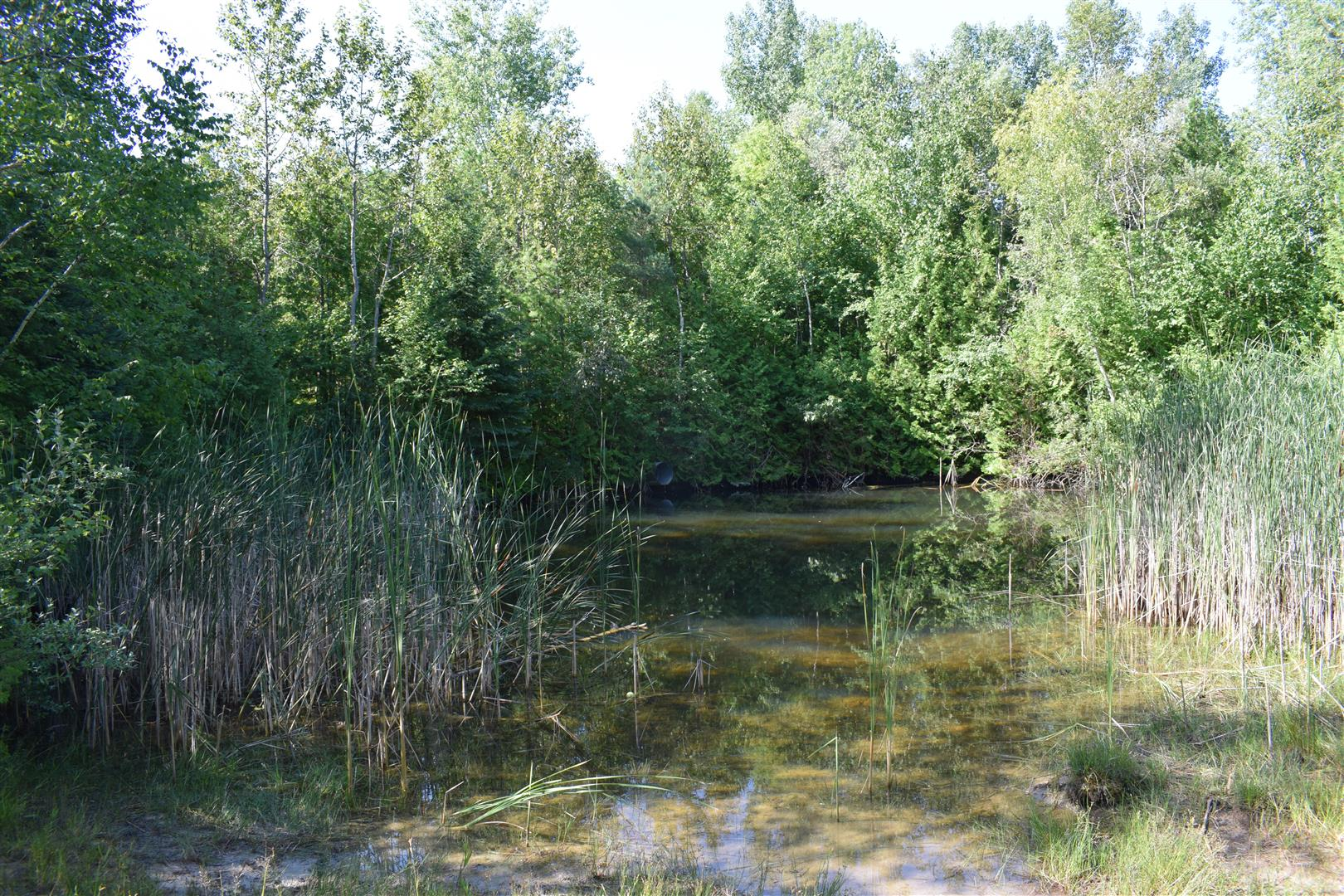 Heber Down Conservation Area - Whitby, ON - July 25/18