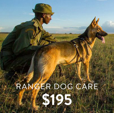 _0001_ranger dog care.jpg