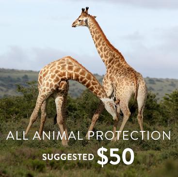 _0007_general species protection.jpg