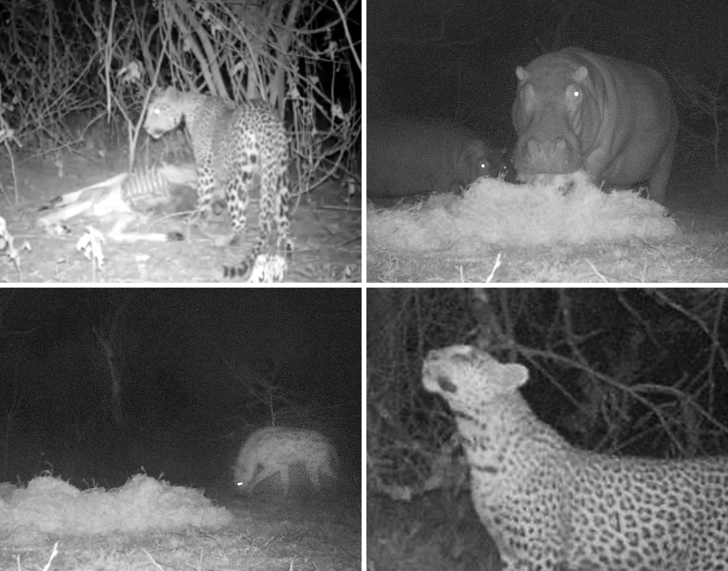 Copy of Animals caught on our camera traps