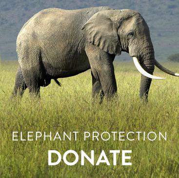 _0004_general elephant.jpg