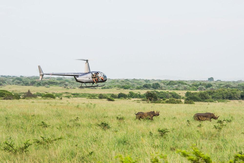 rhinos peter chadwich.jpeg