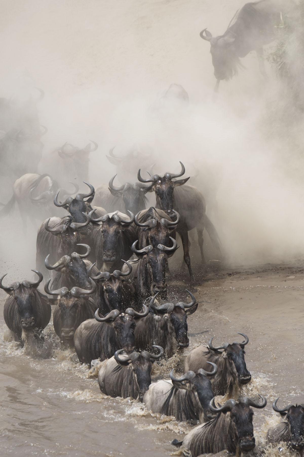 The wildebeest migration, Kenya 2017.  Photo credit: Nadja Rutkowski, Le Petit Grand Films.