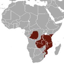 Four-toed sengi (Petrodromus tetradactlyus) distribution map. Source: wikipedia.com