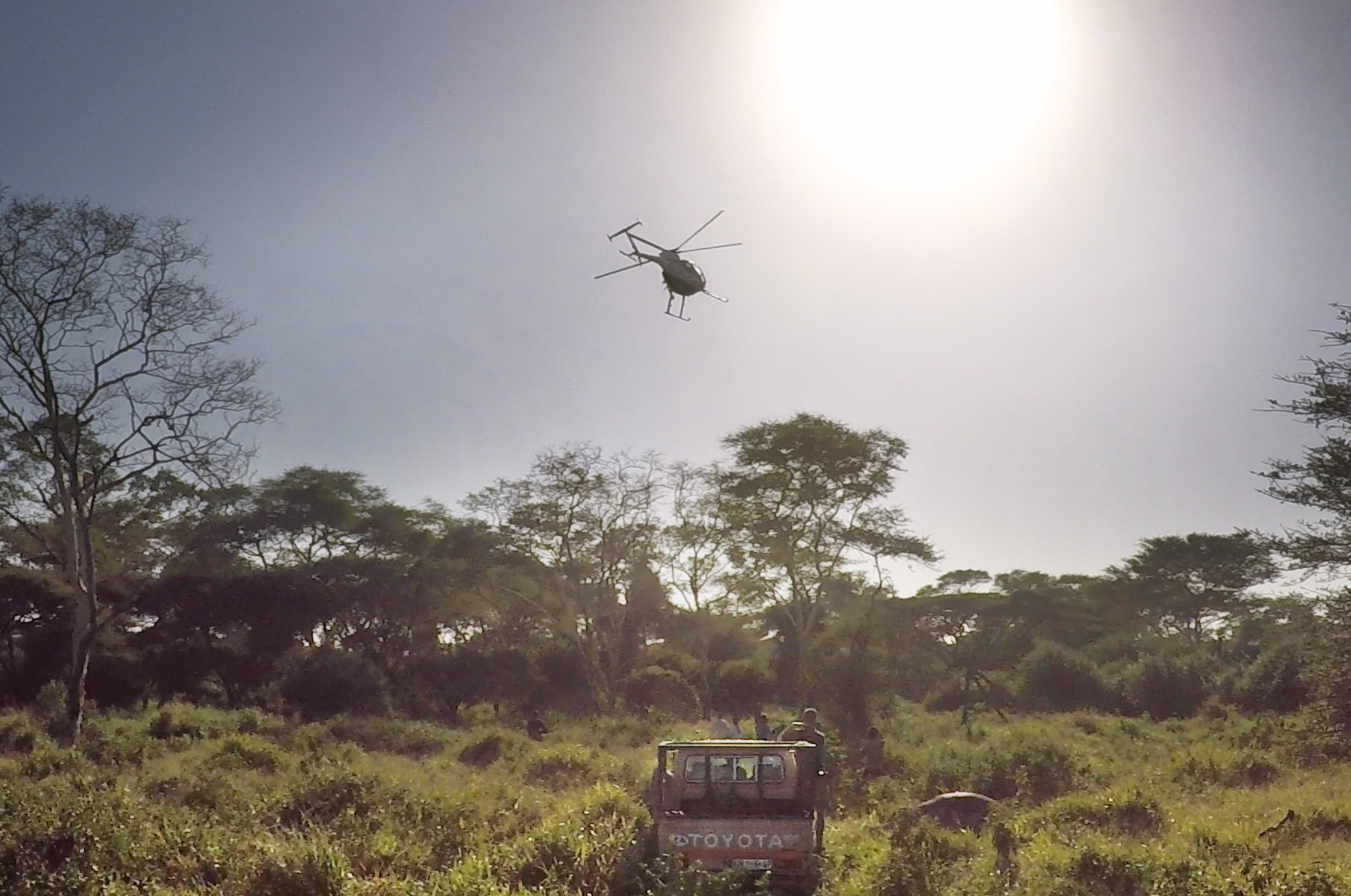 Dr. Dave Cooper locating the elephants from the air.