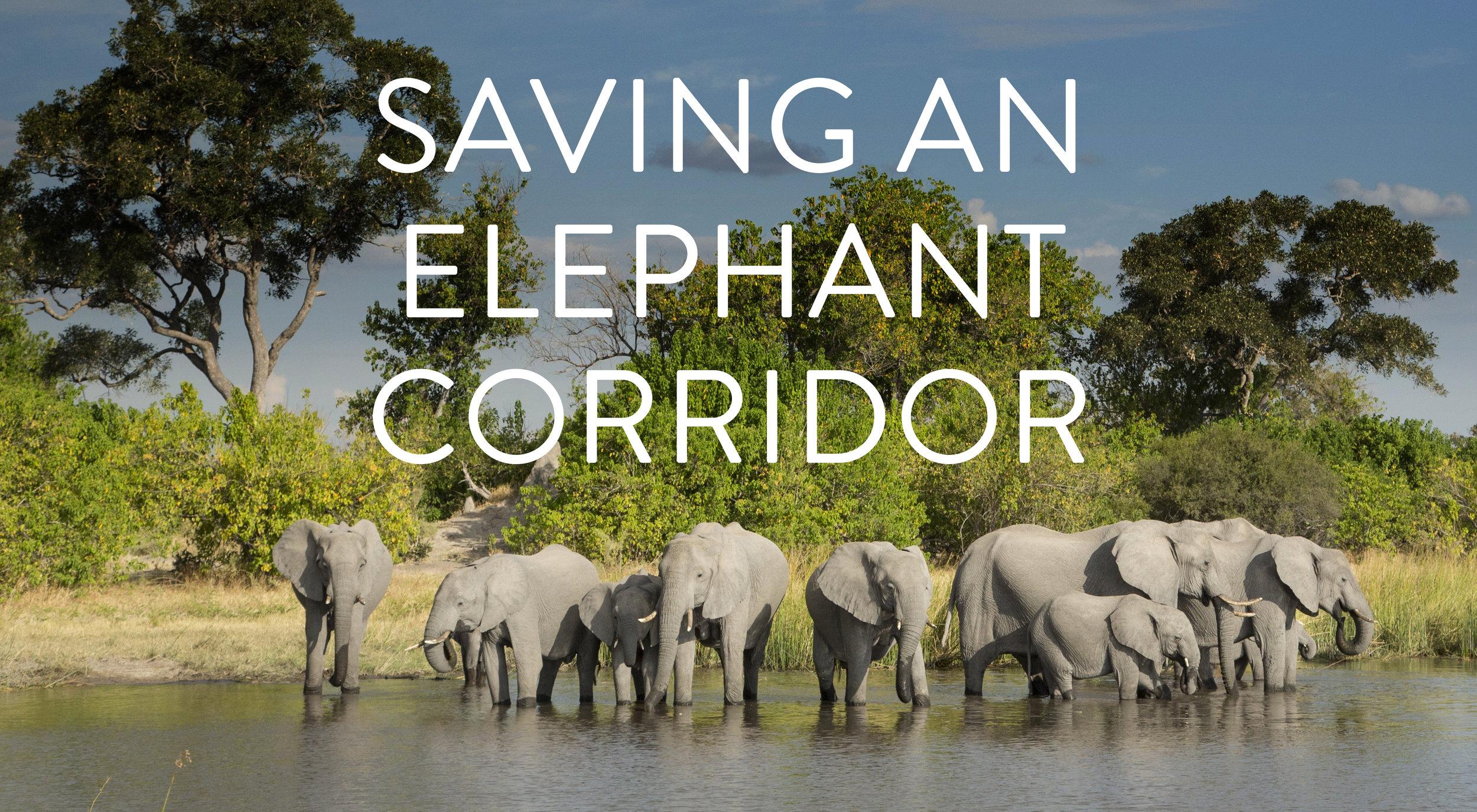 elephang corridor1.jpg