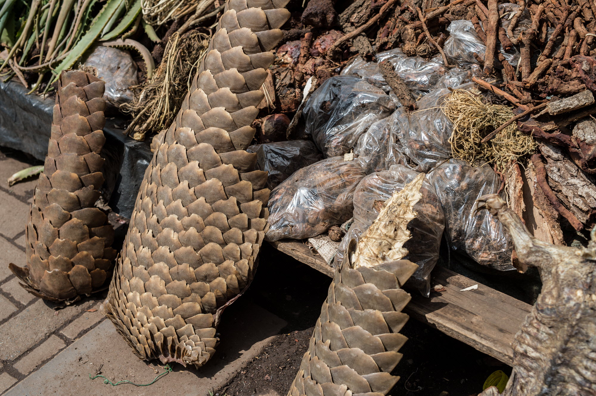 Muti market in Africa selling animal parts.  Photo Credit: Jo-Anne McArthur/WeAnimals/WildScreen Exchange.